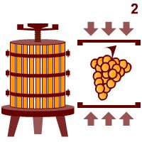 Champagne wine: Pressing and fermentation.