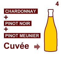 Champagne wine: The 'cuvée'.