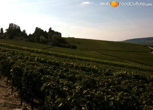 Champagne wine: Champagne landscape (4)