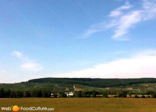 Champagne wine: Champagne landscape (10)