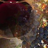 Vino Friularo: La terra del vino Friularo.