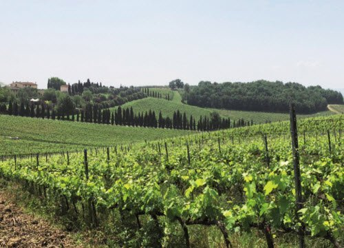 Leonardo da Vinci and wine: Vinci, landscape (crt-01)