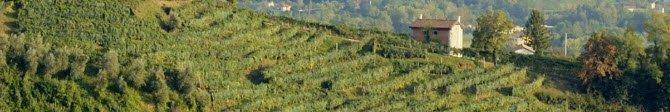 Prosecco wine: Conegliano-Valdobbiadene DOCG (crt-01)