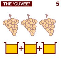 Prosecco wine: The 'cuvée'.