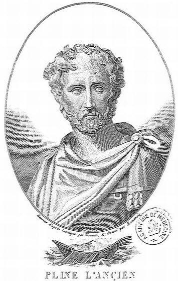 Prosciutto di Parma: Pliny the Elder about pork meat (img-03)