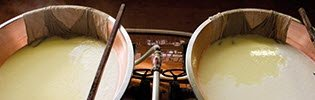 Parmigiano Reggiano takes shape (crt-01)