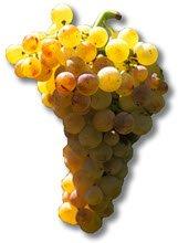 Vino Marsala: Le uve del Marsala (crt-01)
