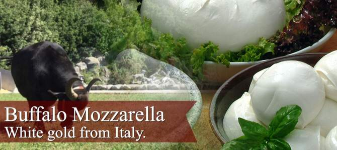 Buffalo Mozzarella: white gold from Italy (crt-01)