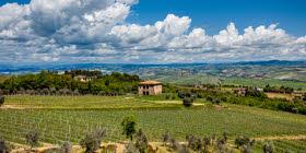Brunello di Montalcino: paesaggio (crt-02)
